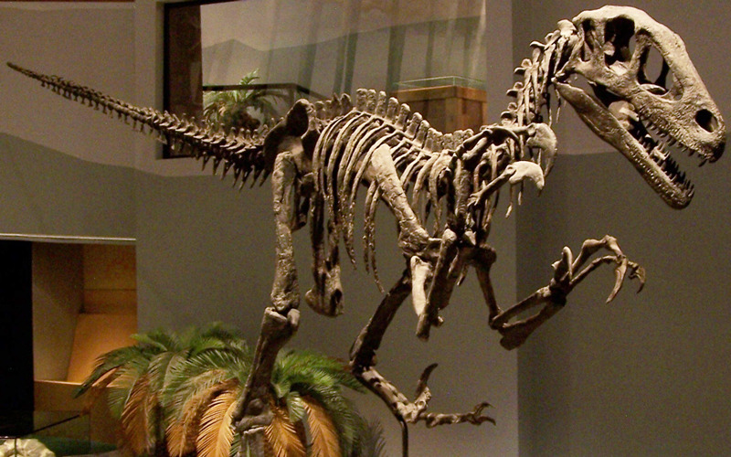 The utahraptor, a Cretaceous dinosaur.
