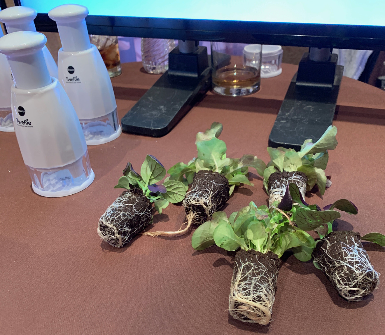 Starter plants for the Miracle-Gro Twelve
