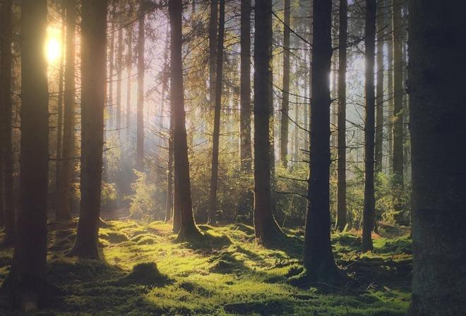 A forest scene by Mariko Klug