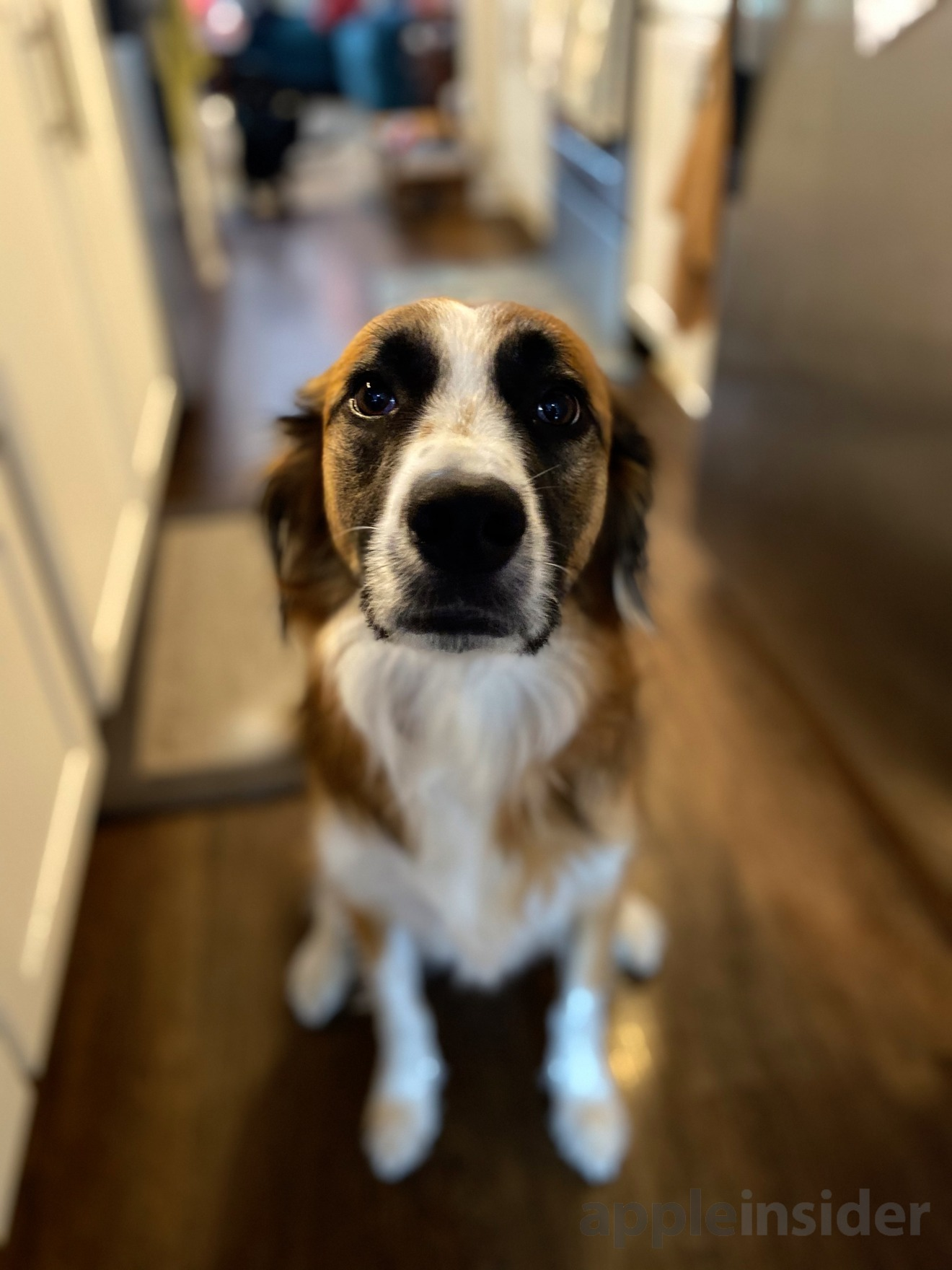 Mosby the puppy, shot with the iPhone 11's new Portrait mode