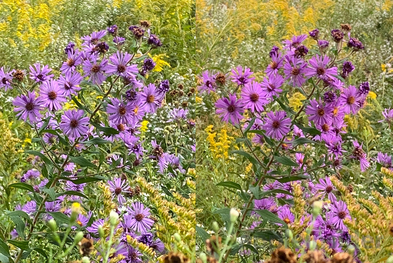 5X digital zoom on the iPhone 11 (left) and iPhone XR (right)