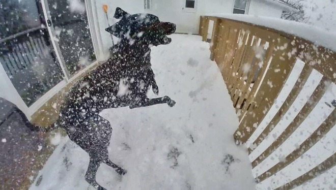 A frame of a sample video of our dog playing in the snow captured on the GO