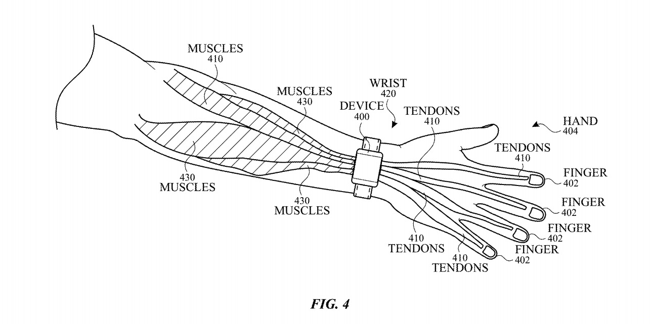 The Apple Watch is worn in close proximity to muscles and tendons.