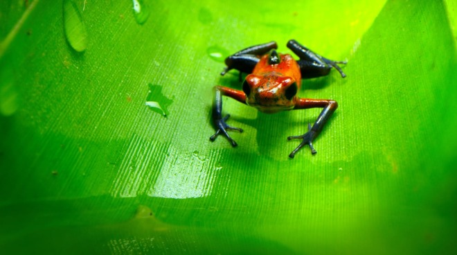 A thumbnail-sized frog from 'Tiny World' [Apple TV+]