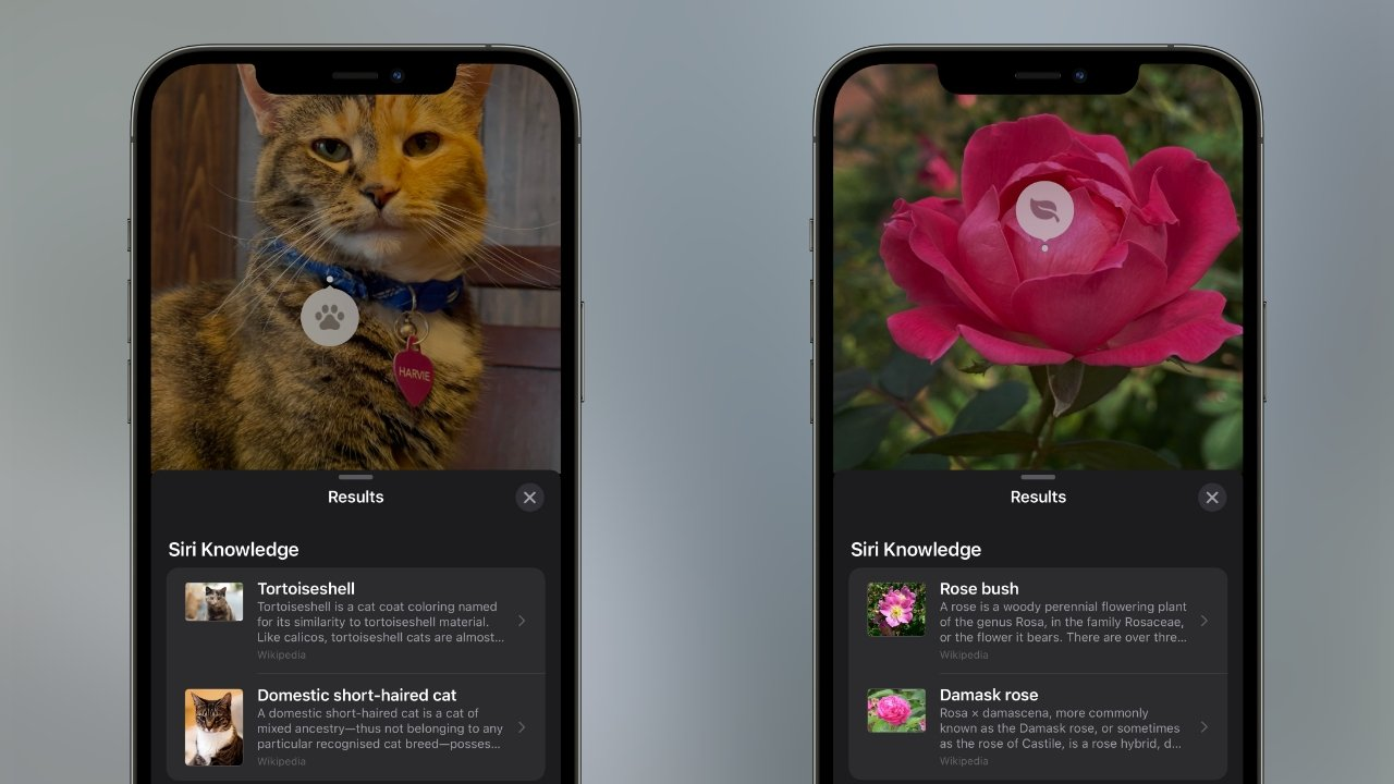 Visual Look up brings intelligent search to your photos